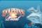 Dolphin's Pearl играть на деньги