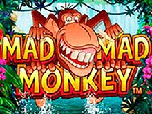 Популярный красочный онлайн слот Безумная Обезьянка для игры на деньги